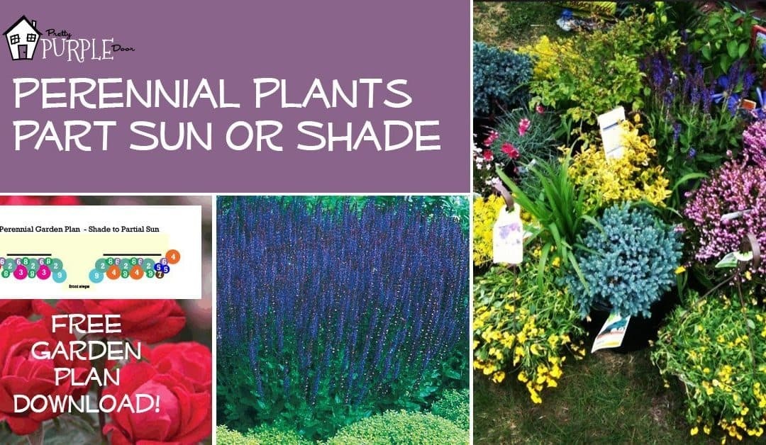 Perennial garden plans for partial sun or shade pretty for Garden plans and plants