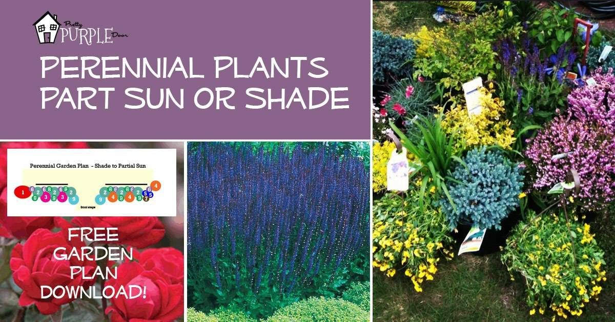 Perennial Garden Plans for Partial Sun or Shade | Pretty Purple Door