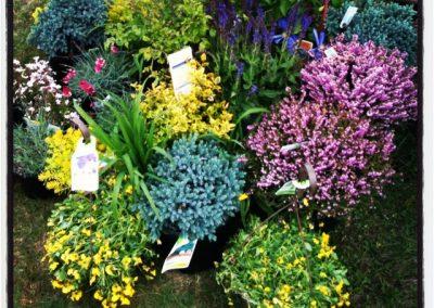 perennial garden plans