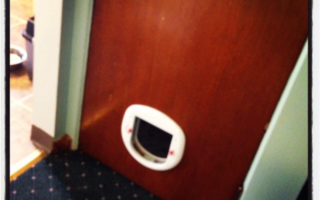 Quincy gets a cat door!