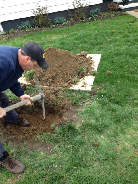 Using a pick axe to plant a plant in an unestablished bed.