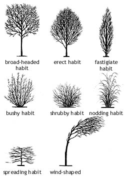 common tree forms
