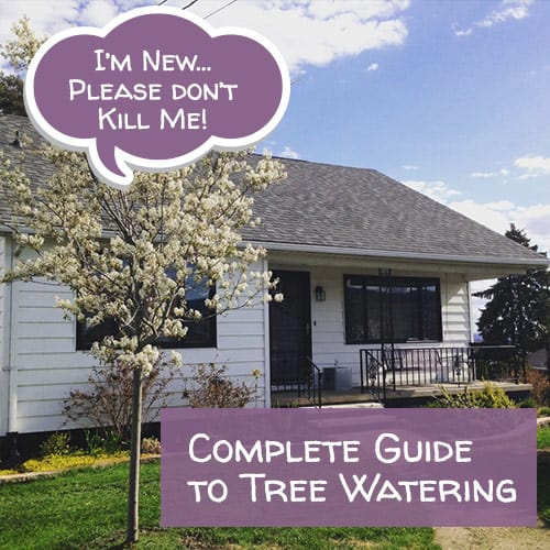 Free - Complete Guide to Watering your new tree