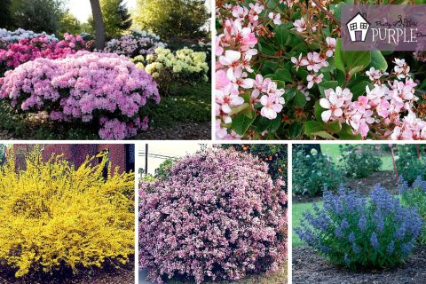 Perennial Garden Plan: Perennial Shrubs Layer 3