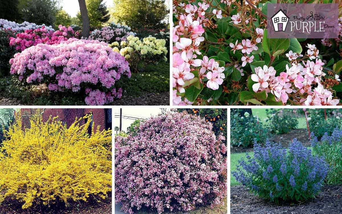 Perennial garden plan perennial shrubs layer 3 pretty for Outdoor bushes and plants