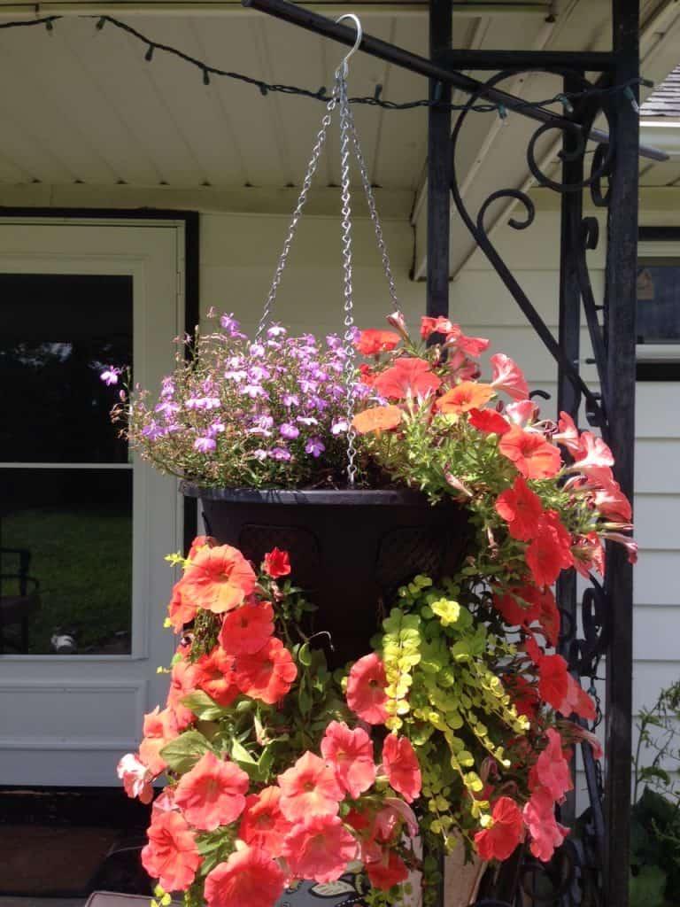 DIY Self Watering Hanging Basket: Pretty Purple Door