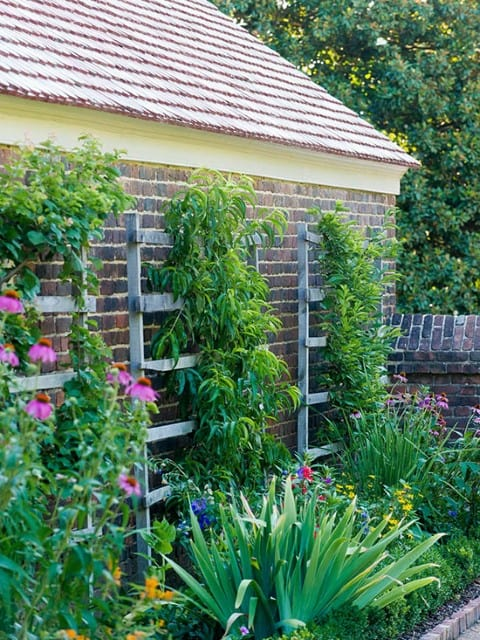 Adding a trellis or low fence behind existing plantings is a great small garden idea