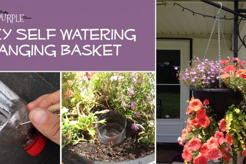 DIY Self Watering Hanging Basket