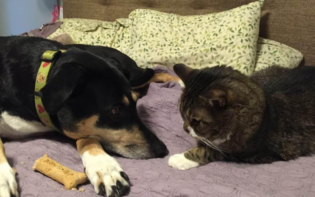 The loss of my dog, my best friend, my Roxy Ann