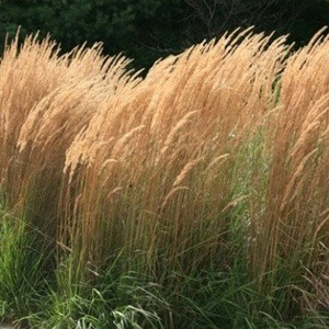 Feather Reed