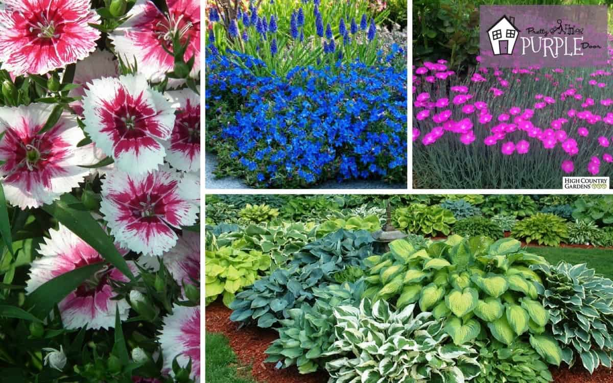 Perennial garden plan plants and flowers layer 4 pretty for Garden plans and plants