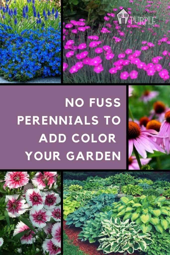 no fuss perennials to add a layer color your garden