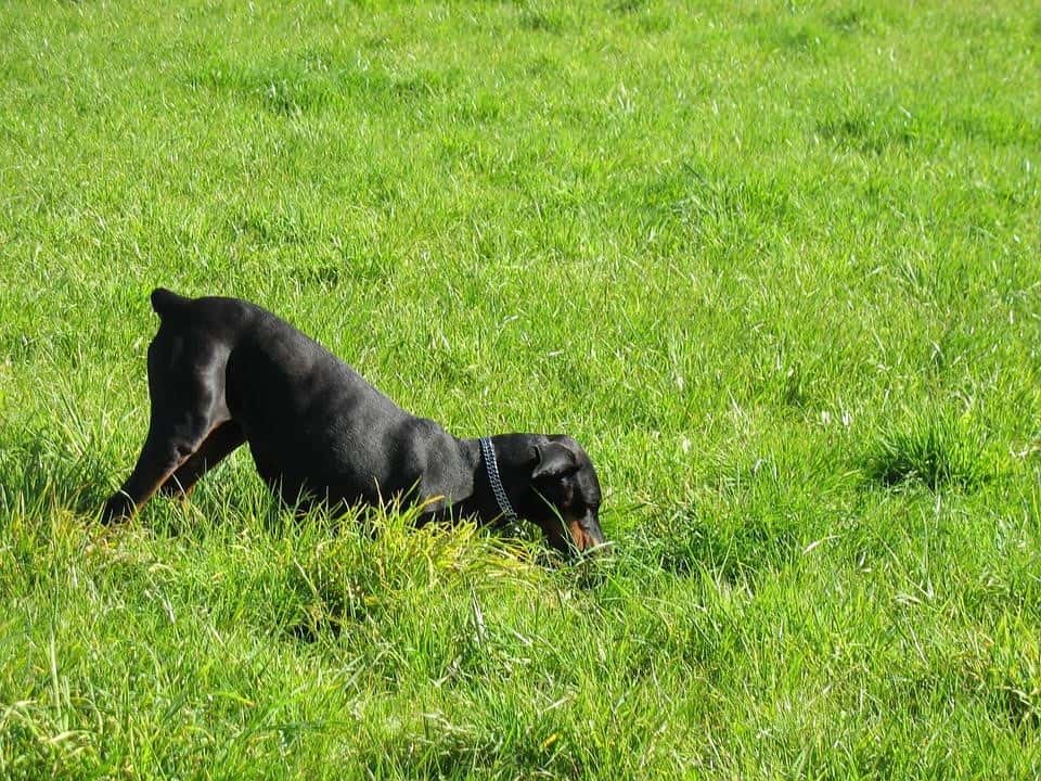 THE DIGGER - DOG PERSONALITY FOR LANDSCAPING