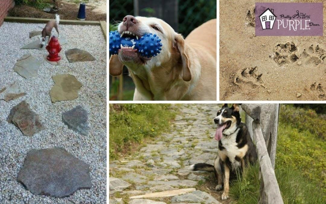 Dog-Friendly Landscaping Tips