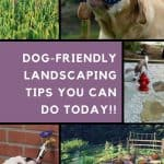Grid of photos with backyard spaces and doggies enjoying them.