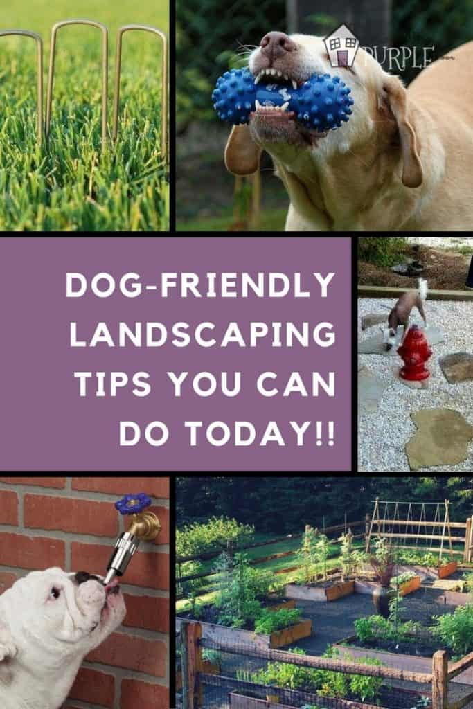 Dog-Friendly Landscaping Tips You Can Do Today