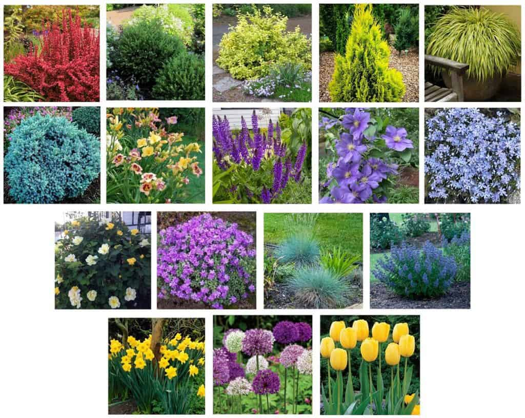 plants used in the foundation garden plan