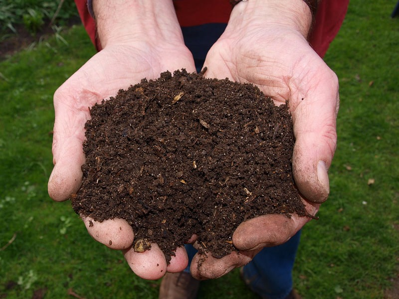 Amend your soil with compost to improve the quality
