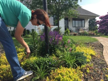 Amy gardening - weeding front bed