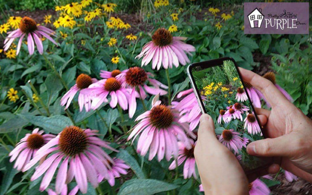 apps for plant identification on the go