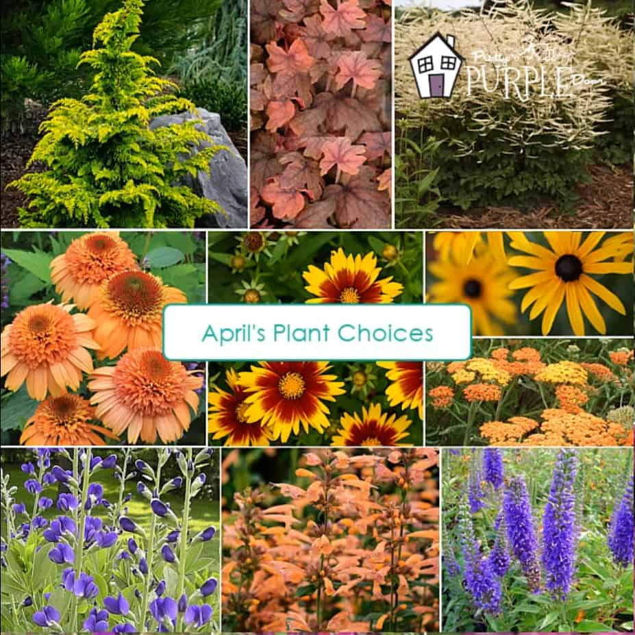 aprils orange purple plant selections 9 photos in a grid