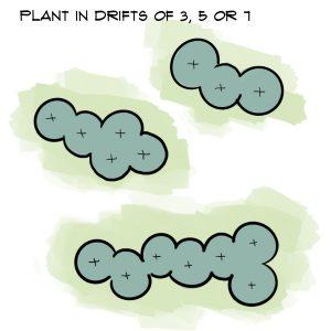 Arrange plants in drifts of 3 5 or 7
