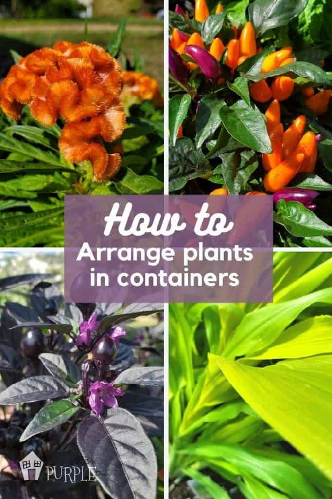 Closeups of orange, purple and green plants; How to arrange plants in containers