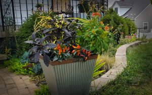 fall planter with purple and orange flowers