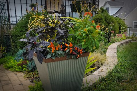 How to arrange plants in containers – 7 design tips