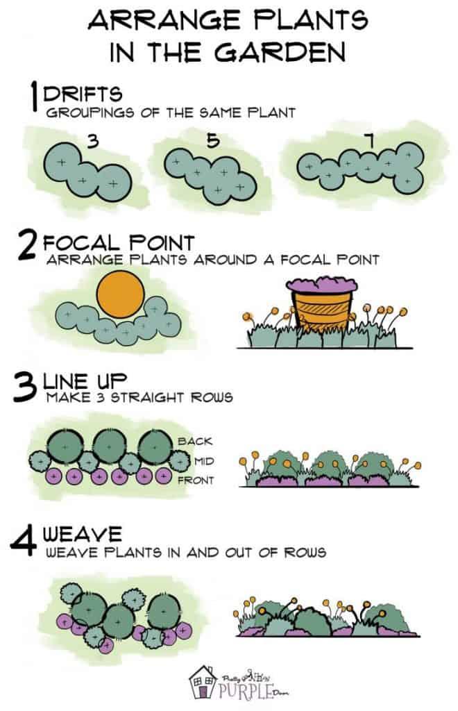 Arrange plants in the garden Infographic