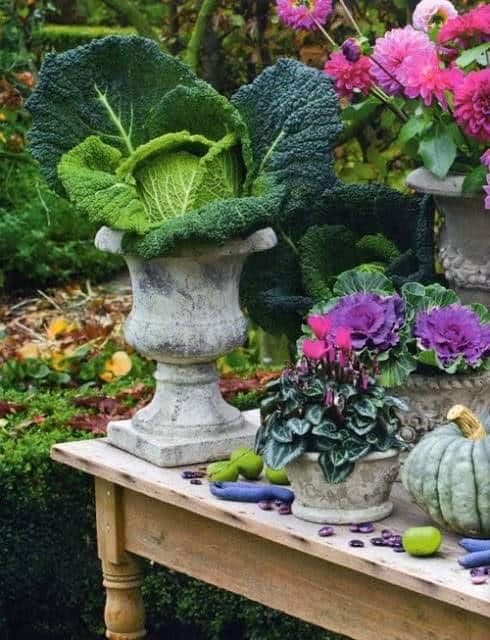 Concrete urn on a table with large head of cabbage