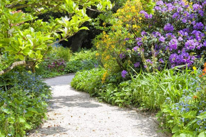 Curved stone path in a colorful garden with flowering yellow azalea, purple rhododendron, blue forget me not