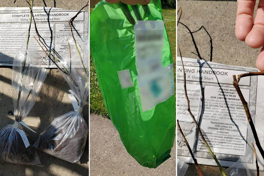 Plants arriving in plastic bags with broken branches