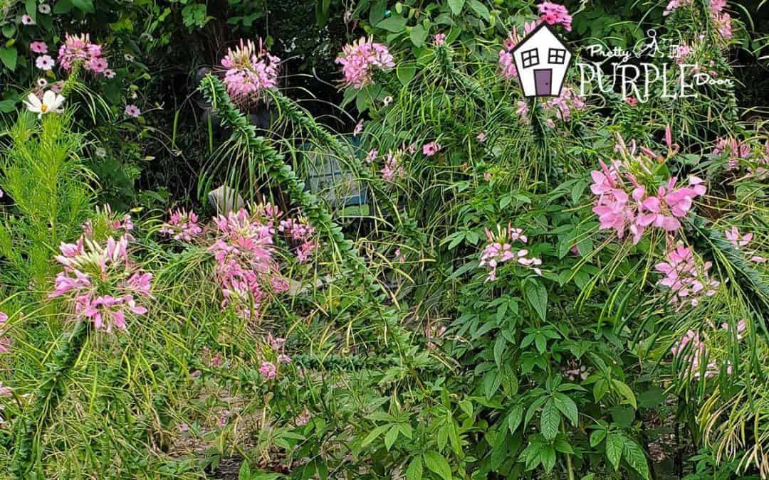 Disappointed In Your Garden's Performance? Here's How To Love Your Garden Again
