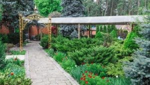 The way use evergreens to create structure is to combine them with other plants in your mixed border.