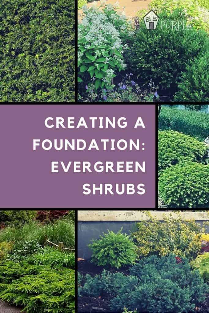 evergreen shrubs pinterest image