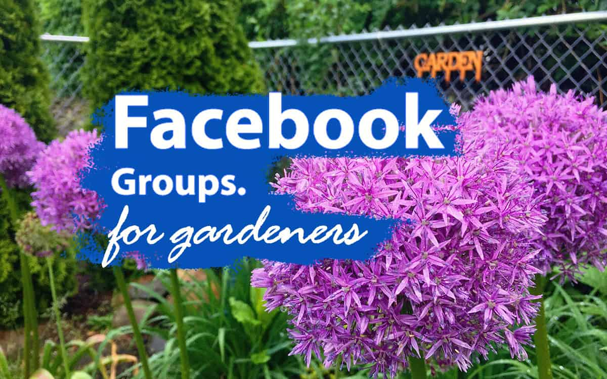 Facebook Gardening Groups The Good The Bad And The Ugly Pretty Purple Door