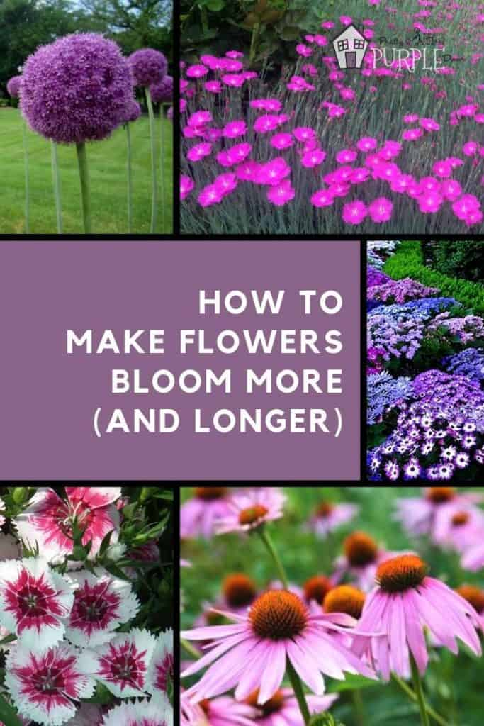 Make your flowers bloom more (and longer)
