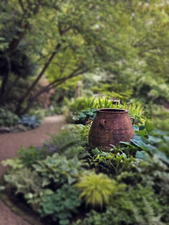 Shady green woodland garden with red rusted barrel as a  focal point