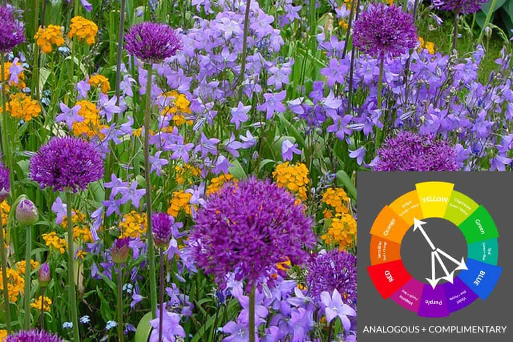 Complex Garden Color Scheme with blue, violet, purple and amber