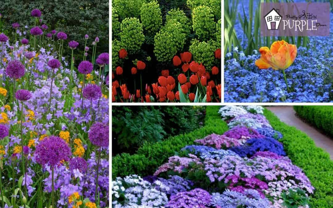 Garden Color Schemes: The best color combos for your garden