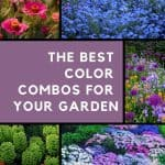 A variety of garden color scheme examples in a grid format