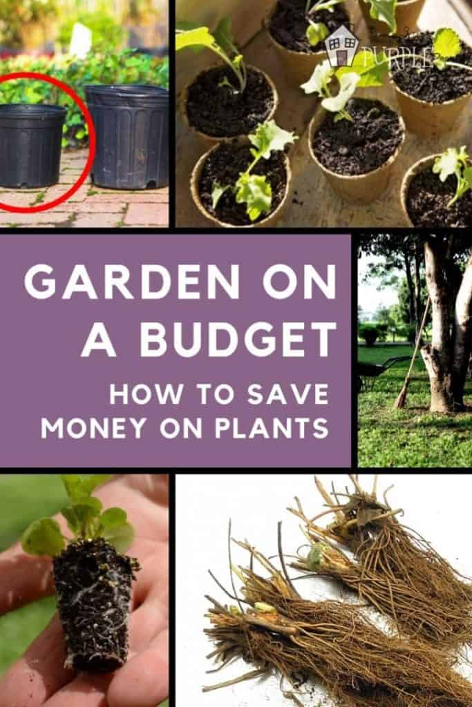 Garden on a budget: how to save money on plants