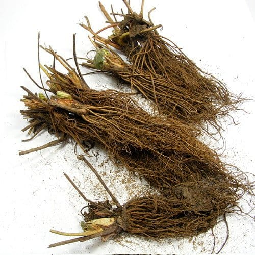 garden on a budget by purchasing bare root