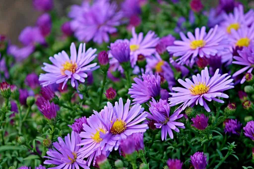 Monochromatic garden color schemes