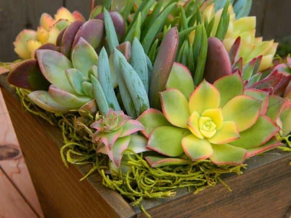 Succulent Centerpiece Housewarming Gift
