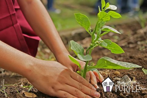 How to plant the first plant in your bare garden