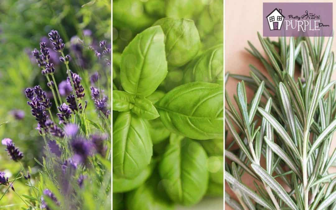 3 blocks with lavender, basil and rosemary herbs