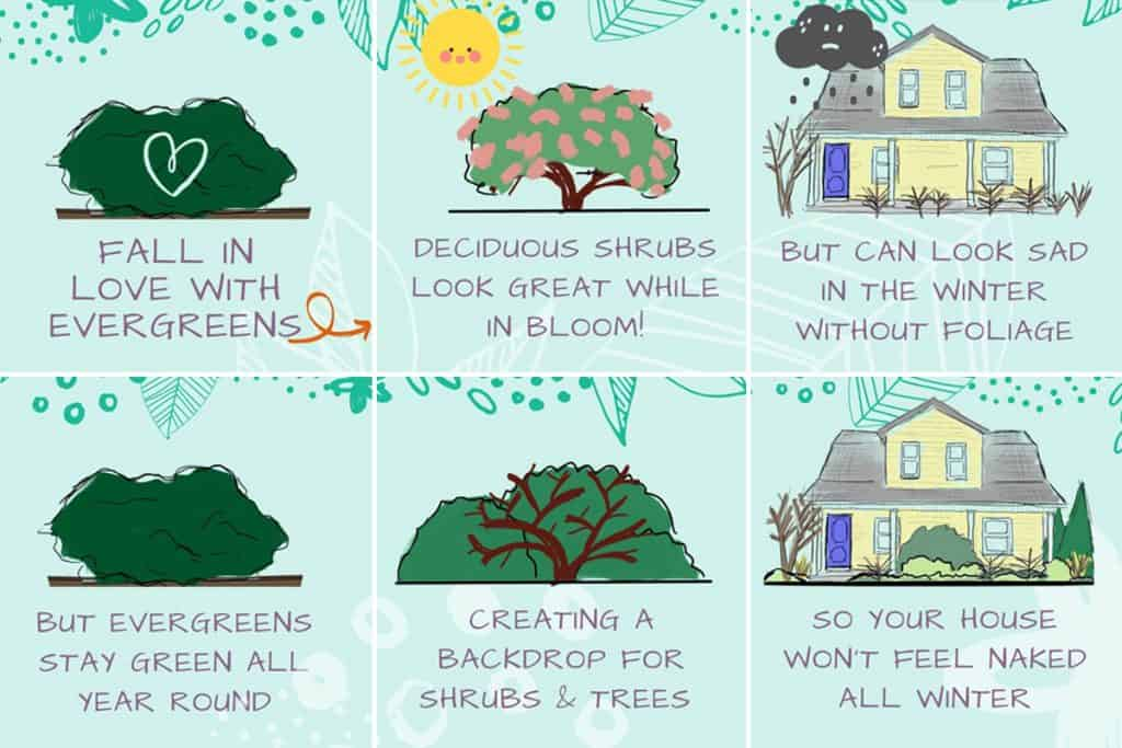 Storyboard illustrations on the importance of evergreens in winter landscapes