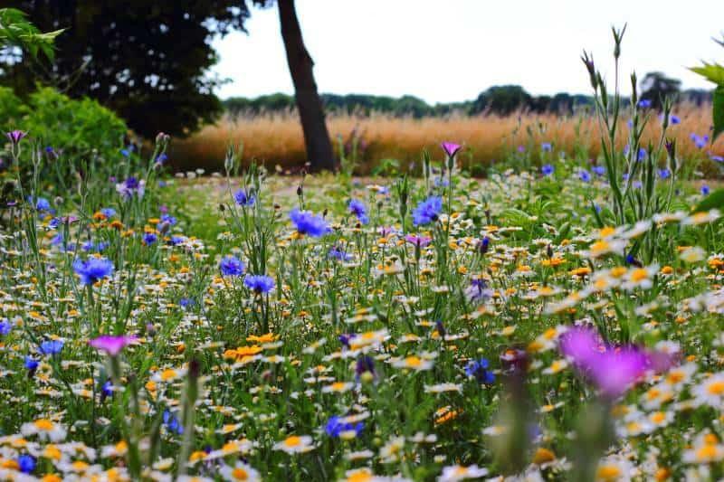 Meadow/Prairie garden style